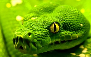 green, animals, snake