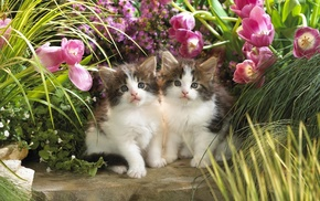 grass, kittens, flowers, beautiful, animals