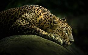 животные, Животные, леопард, дикая, кошка