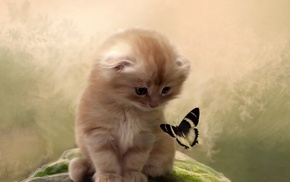 animals, background, cat, kitten, butterfly