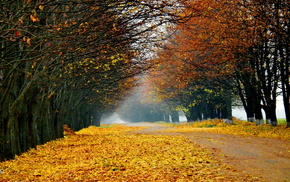 trees, road, autumn, nature, forest