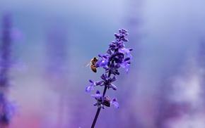 сиреневый, цветок, растение, Лаванда, насекомое, пчела