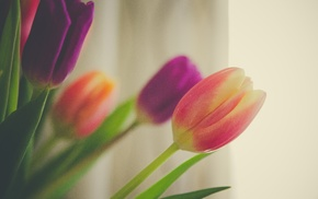 spring, flowers, tulips, background, bouquet