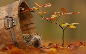 autumn, branch