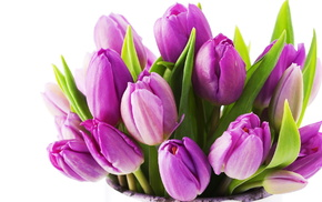 stunner, bouquet, flowers, tulips, flower