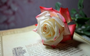 flower, rose, flowers, book