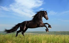 grass, animals, horse, clouds