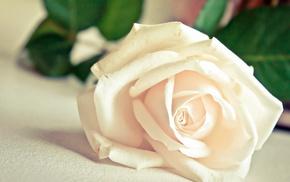 rose, flower, macro, flowers, petals