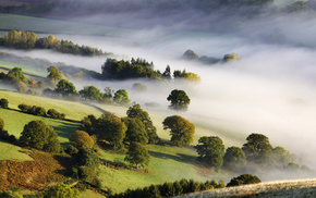 morning, mist, trees, valley, nature