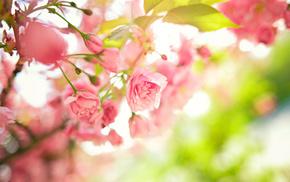 tree, twigs, flowers, spring, leaves