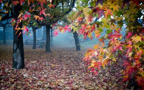 autumn, leaves, mist