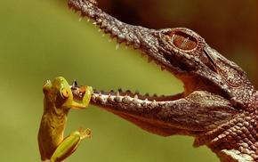 животные, жизнь, крокодильчик, лягушонок