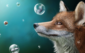fox, stunner, bubbles