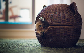 animals, basket