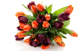 flowers, tulips, spring, flower, bouquet