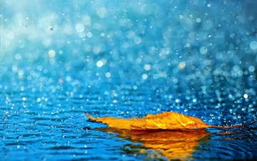 yellow, leaf, water, autumn, rain