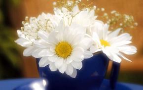stunner, chamomile, flowers
