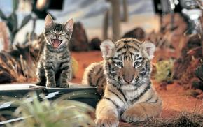 Кот, котёнок, тигрёнок, кошка, животные, тигр