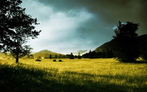dawn, nature, hills, trees, grass