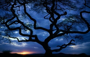 silhouette, tree, evening, clouds, sunset