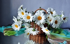 flowers, stunner, bouquet, flower, chamomile