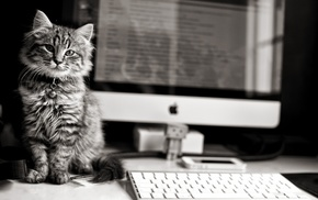 animals, computer, kitten