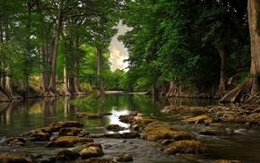 лес, вода, корни, день, деревья, природа