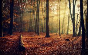 light, autumn, trees, foliage, rays