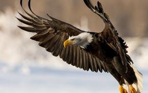 птица, животные, полёт, крылья