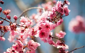 flowers, tree, bloom, spring
