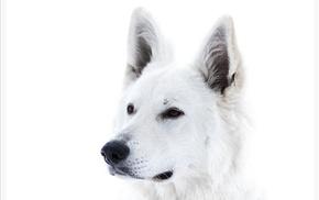 background, animals, dog