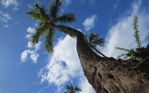 sky, clouds, palm, nature