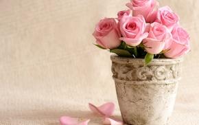 roses, flowers, petals