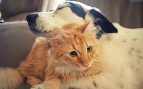 животные, собака, Кот, дружба