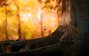 trees, nature, butterfly, bokeh