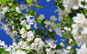 flowers, spring, nature, bloom, tree
