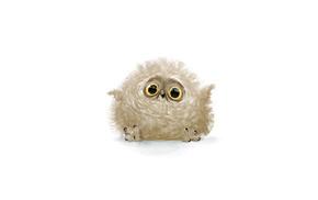 stunner, white background, owl, feathers, joy