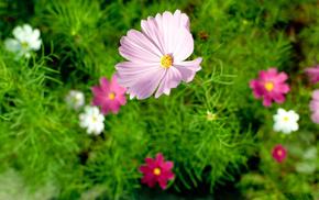 macro, summer, nature, flowers, flower
