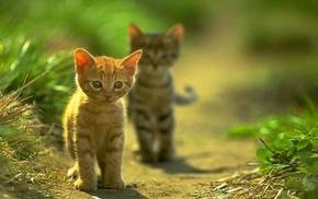 animals, kittens