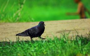 grass, bird, animals