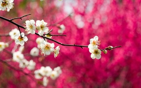 bloom, branch, tree, flowers, macro