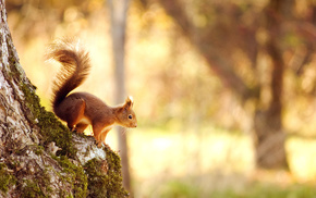 tree, squirrel, forest, moss, animals
