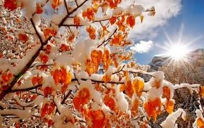 небо, деревья, зима, свет, облака, солнце