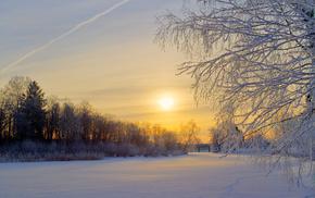 winter, glade, morning, trees, snow