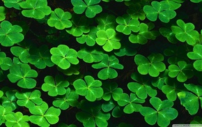 green, leaves, nature, clovers