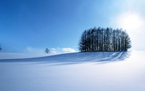 деревья, природа, зима, снег