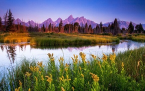 forest, flowers, grass, river, mountain