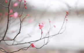cherry, spring, macro, sakura