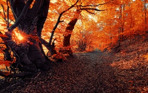 seasons, forest, nature, landscape, fall, sunset