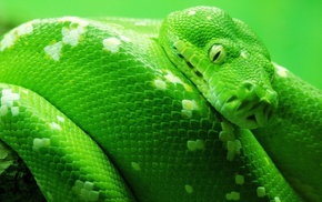 snake, animals, nature, green, reptile